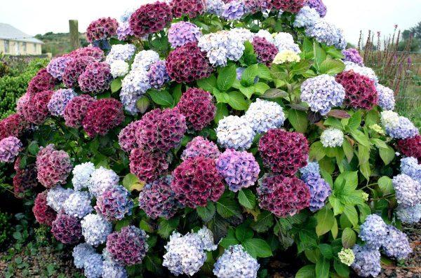 Купить цветы для дачи москва