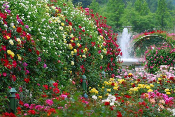 красивый сад с цветами фото стала