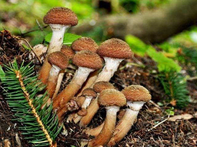 всеволожск грибы грибочки в контакте