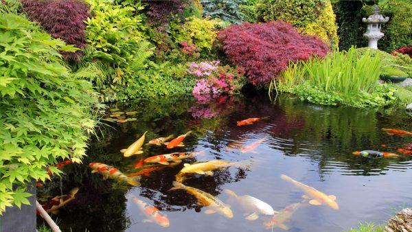 водоем в саду красивые картинки каждой вещи можно