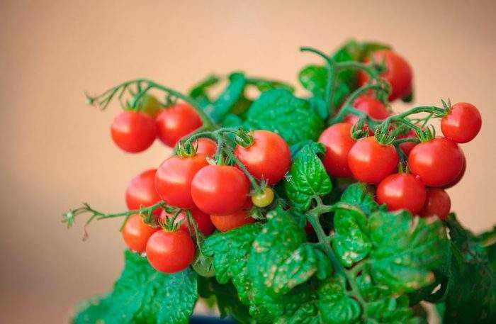 Картинки по запросу Необычный способ посадки помидоров осенью под зиму.