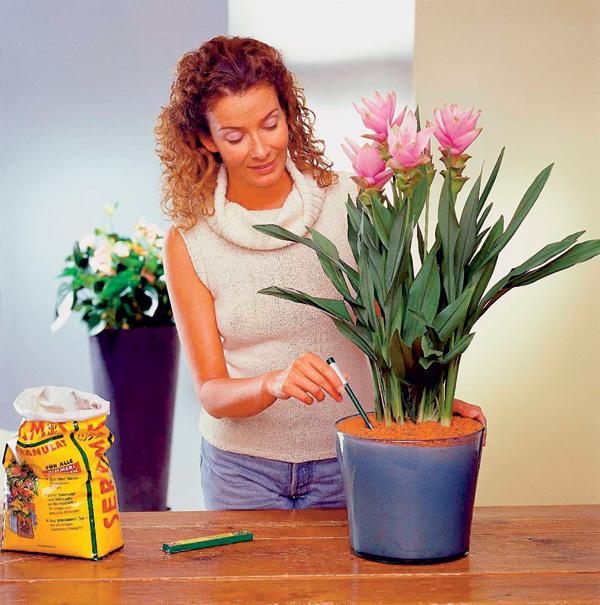 комнатных растений
