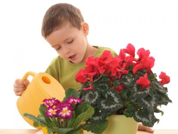 komnatnyye rasteniya v detskoy 061