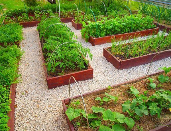 лучшее универсальное удобрение для огорода