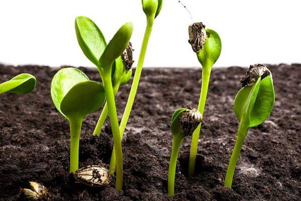 seedlings 2 big