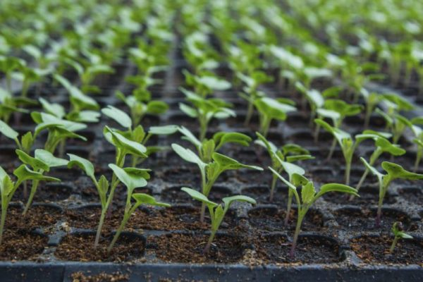 seedlings 800x533
