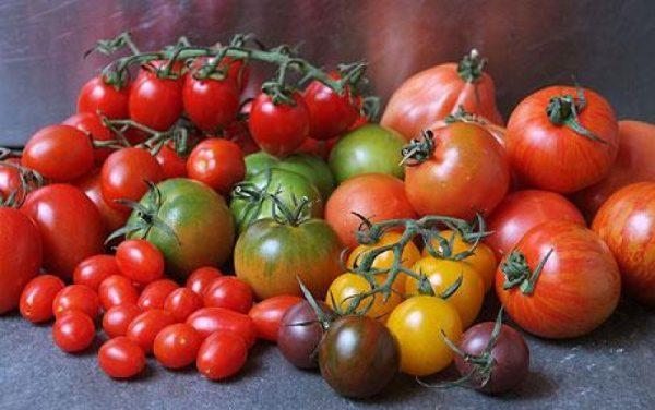 sorta tomatov dlya teplitsy