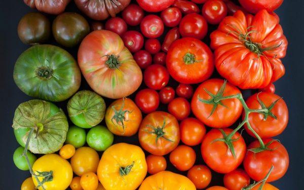 sorta tomatov