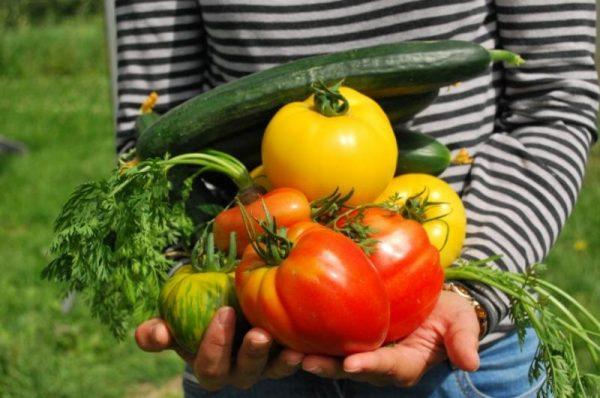 pomidory ogurcy