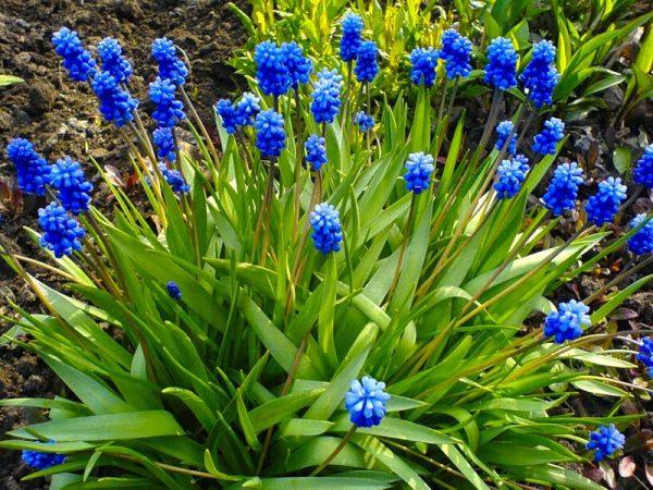 cveti dlya Sibiri 3