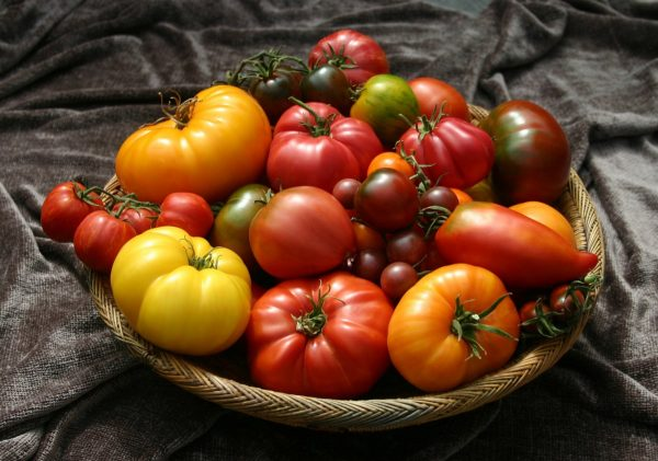 kakie semena tomatov vyibrat 07