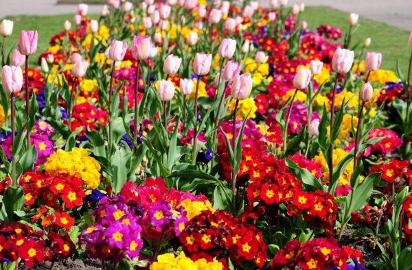 mnogoletnie cvety 1 1024x673