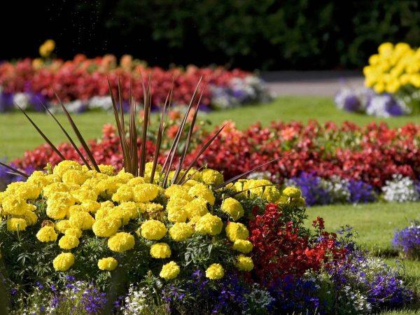 mnogoletnie cvety 3