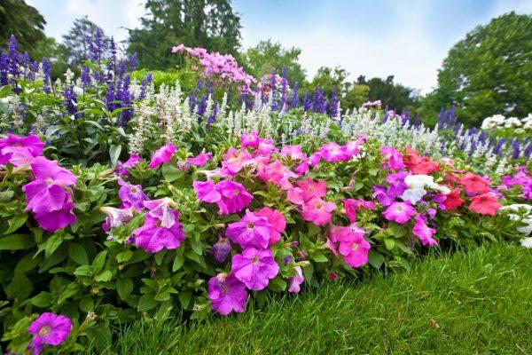 mnogoletnie cvety 6 1024x683