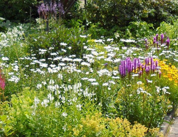 august zvetniki