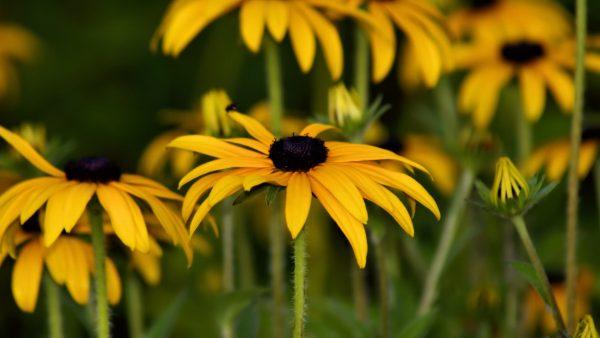 avgust chto sdelat v tsvetnike