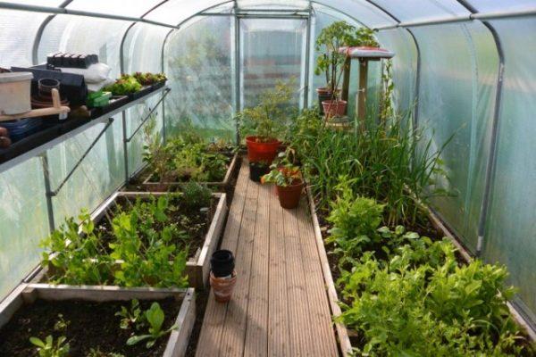 greenhouse 03 640x427
