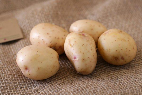 potato m