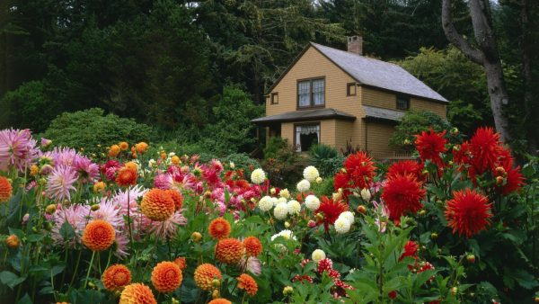 Kakie cvety sazhajut osenju85