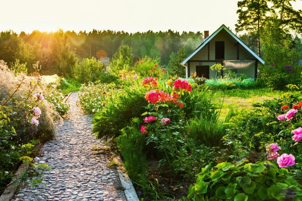 kakie cvety sazhayut osenyu na dache dlya cveteniya vesnoj i letom1