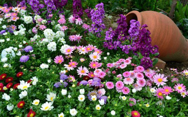 kakie cvety sazhayut osenyu na dache dlya cveteniya vesnoj i letom34