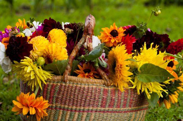 osennie cvety v sadu 121