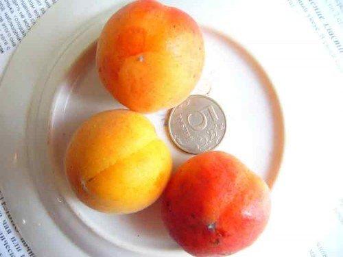 tri abrikosa na blyude 500x375