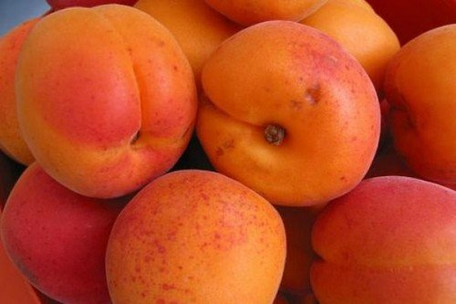 yarko oranzhevyy abrikos s rumyancem 500x333