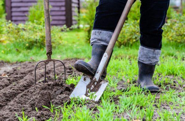 Как ухаживать за садом весной? Какие мероприятия нужно провести уже завтра?