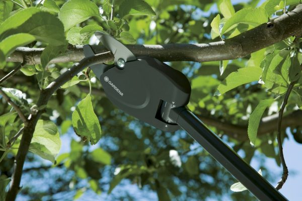 Весенняя подготовка сада, или Как правильно обрезать плодовые деревья