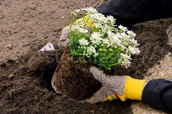 Новый дачный сезон. Апрель: первые работы для садоводов и огородников
