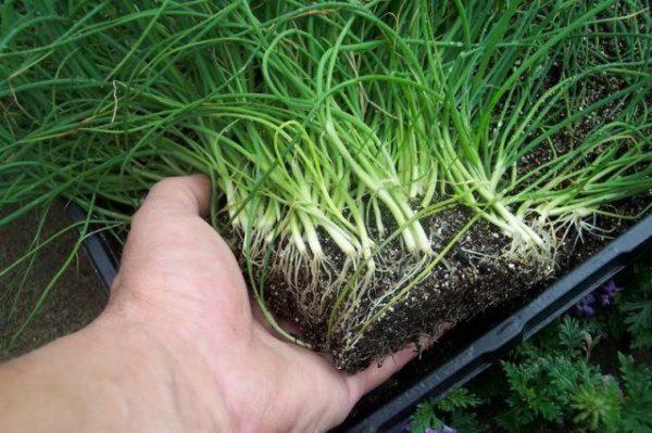 Что можно посеять и посадить в огороде в марте? Календарь огородника