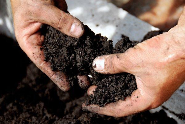 Какие удобрения вносить? Определяем тип почвы на участке для лучшего урожая осенью
