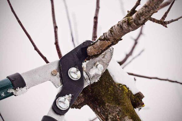 Весенние работы. Обрезка плодовых деревьев: основные виды и методы