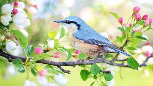 Весеннее «пробуждение» — чем оно может быть опасно?