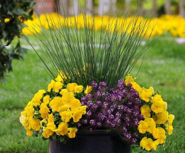 Использование декоративных злаков для благоустройства цветника на даче
