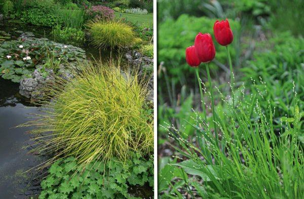 Как оформить цветник в тени? Советы профессиональных садоводов