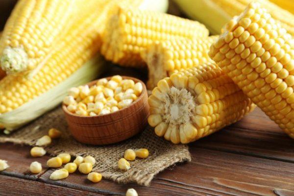 Советы огородникам: как получить обильный урожай кукурузы