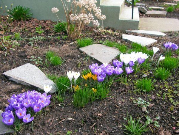 Ждать нельзя: какие работы весной в саду не откладывают на очередное завтра