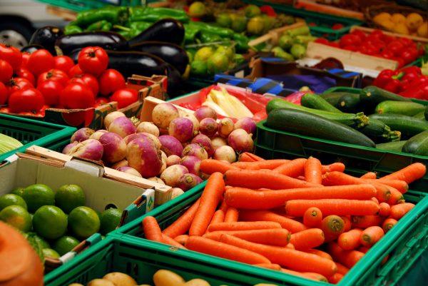 Выращиваем овощи на своей даче: как заработать на таком бизнесе
