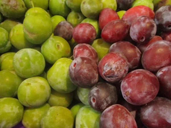 Алыча — фото дерева и его плодов. Рекомендации по посадке и уходу