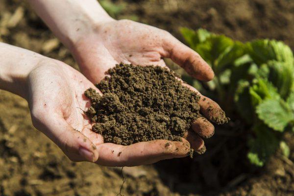 Как применять органическое удобрение в саду и огороде?