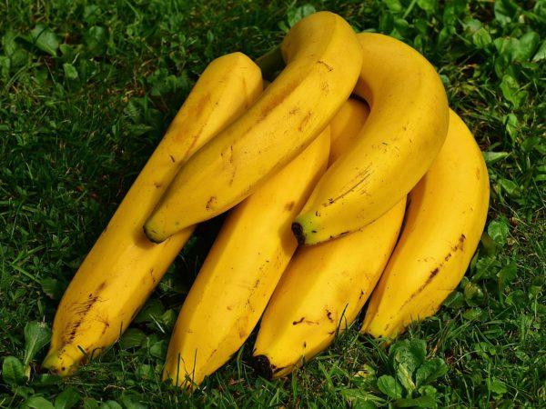 banany084510