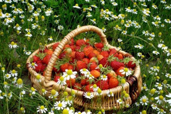 Что и когда сажать в июне огороднику? Основные ошибка, которые допускают начинающие дачники