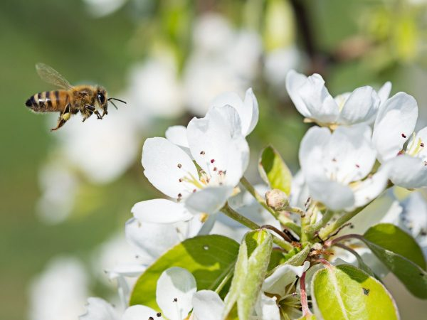 Маленькие труженики большого урожая или важная роль опылителей в жизни растений