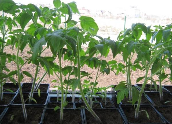 Пасынкование помидор: когда начинать, как и для чего это нужно?