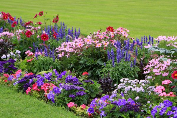 Когда сеять цветы на рассаду и в открытый грунт? Простые советы по посеву и выращиванию