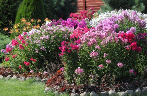 Клумба для ленивых: 5 простых в уходе многолетников для вашего сада