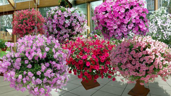Великолепные украшения дома и сада: растения в подвесных кашпо. Секреты выбора и посадки