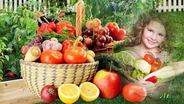 20 важных дел августа в саду, огороде и цветнике. Пора собирать урожай!